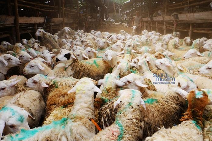 Ketentuan Zakat hewan ternak