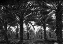 Kisah Abu Dahdah dan Sebatang Pohon Kurma di Surga