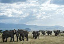Menilik Peristiwa Tahun Gajah