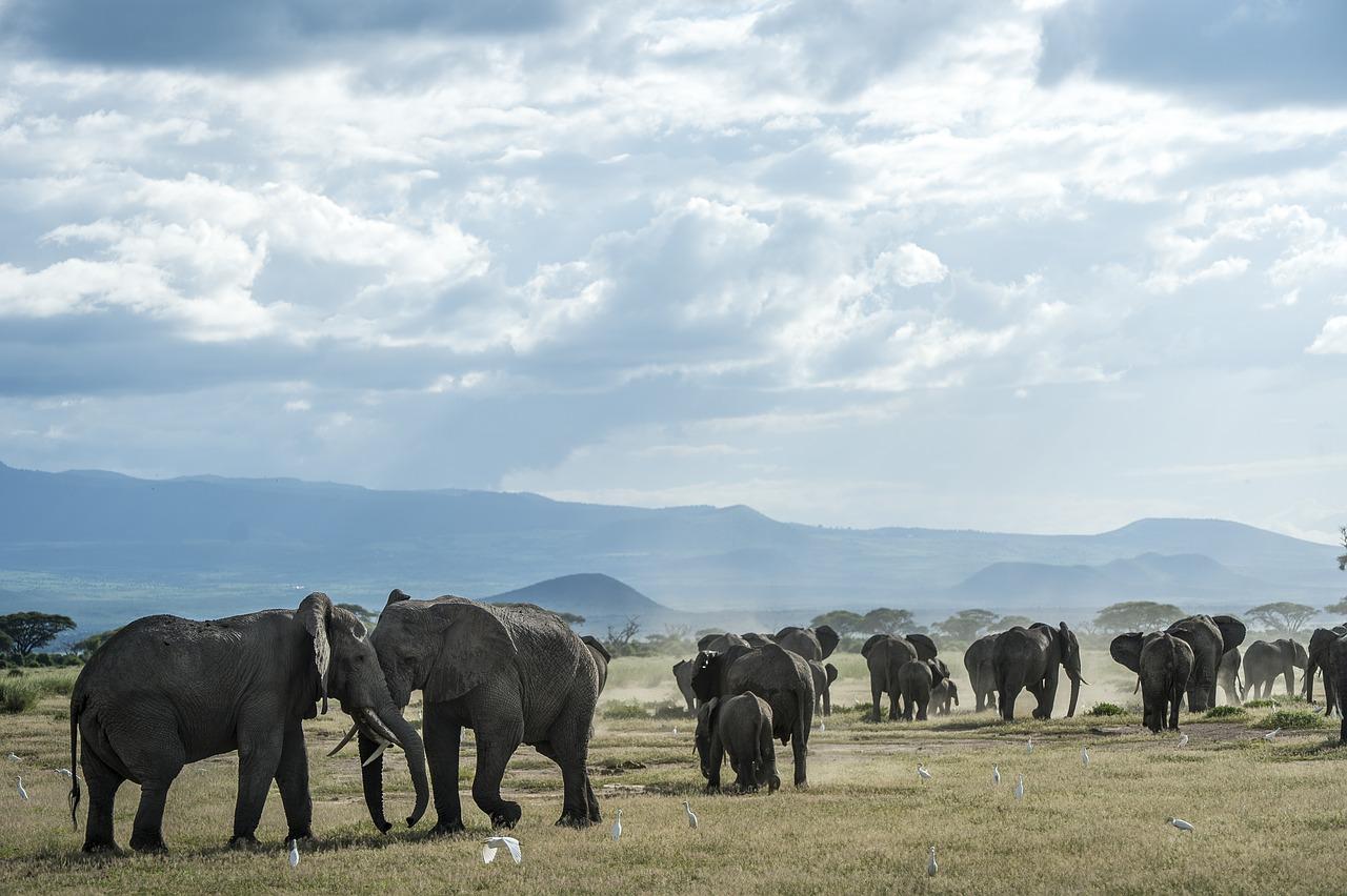 Menilik Peristiwa Tahun Gajah Suaramuslim Net