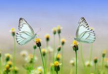 Filosofi Hidup: Cerita Nabi Adam a.s. dan Hawa