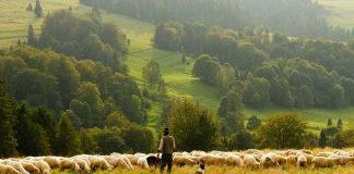 Menjaga Lingkungan Hidup dalam Pandangan Islam