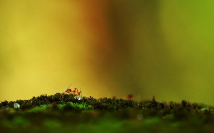 Belajar Kesalihan Sosial dari Semut