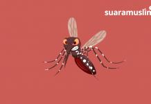 Kenali Gejala dan Pencegahan Demam Berdarah Dengue