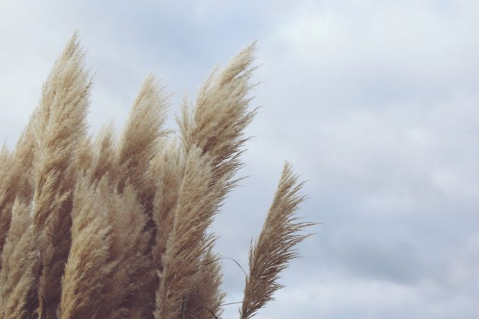 Nabi Isa, Ya'juj Ma'juj dan Angin Lembut yang Mewafatkan Semua Orang Beriman