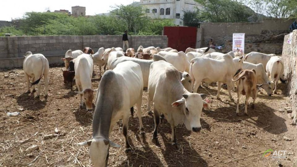 Hewan Kurban Berkualitas Siap Didistribusikan untuk Yaman